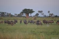 Okavango00083
