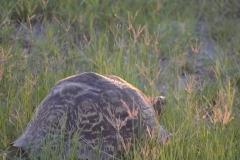 Okavango00090