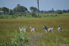 Okavango00483