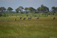 Okavango00493
