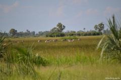 Okavango00512
