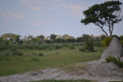 Okavango00547
