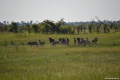 Okavango00639