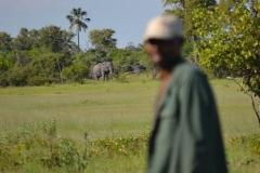 Okavango00668