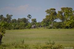 Okavango00670