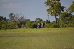Okavango00692