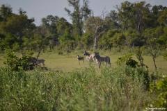 Okavango00769