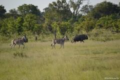 Okavango00794
