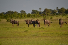 Okavango00876