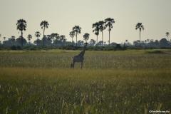 Okavango00929