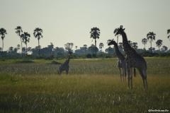 Okavango00936