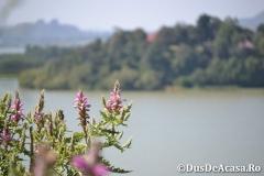 Lacul-Tana00242