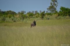 Okavango00136