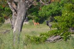 Okavango00188