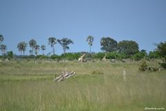 Okavango00249