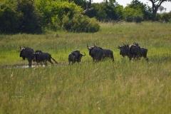 Okavango00321