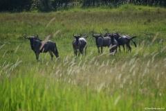 Okavango00328