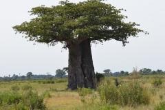 Okavango00376