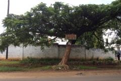 Zambia00073