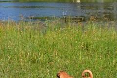 Okavango00024