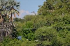 Okavango00044