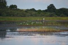 Okavango00127