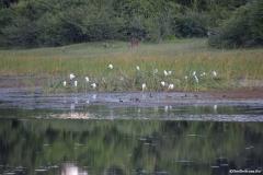 Okavango00142