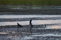 Okavango00147