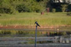 Okavango00159