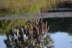 Okavango00194