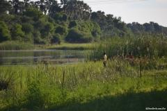 Okavango00205
