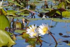 Okavango00358