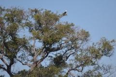 Okavango00362