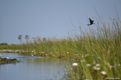 Okavango00379