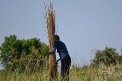 Okavango00392