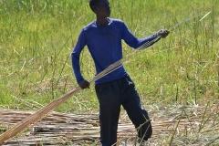 Okavango00398