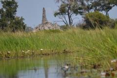 Okavango00430