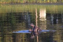 Okavango00236