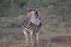 Kruger00009