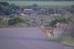 Kruger00020