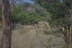 Kruger00937