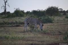 Kruger00957