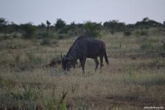 Kruger00959