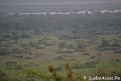 elephanthome422