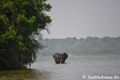 elephanthome718