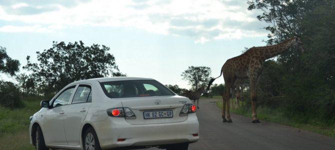 Ferme de lei și Kruger pe centru (6)