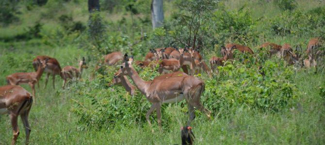 O zi în partea de sud a Parcului Kruger (3)