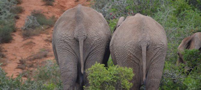 Addo Elephant Park și Port Elizabeth (8)